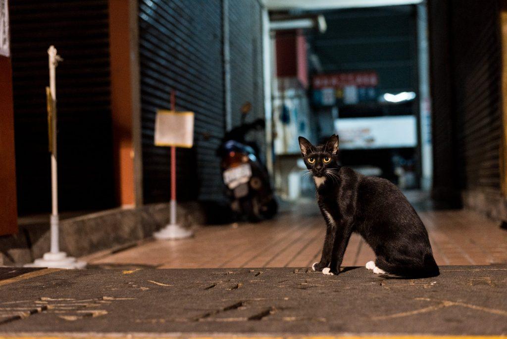 Le chat noir, son histoire